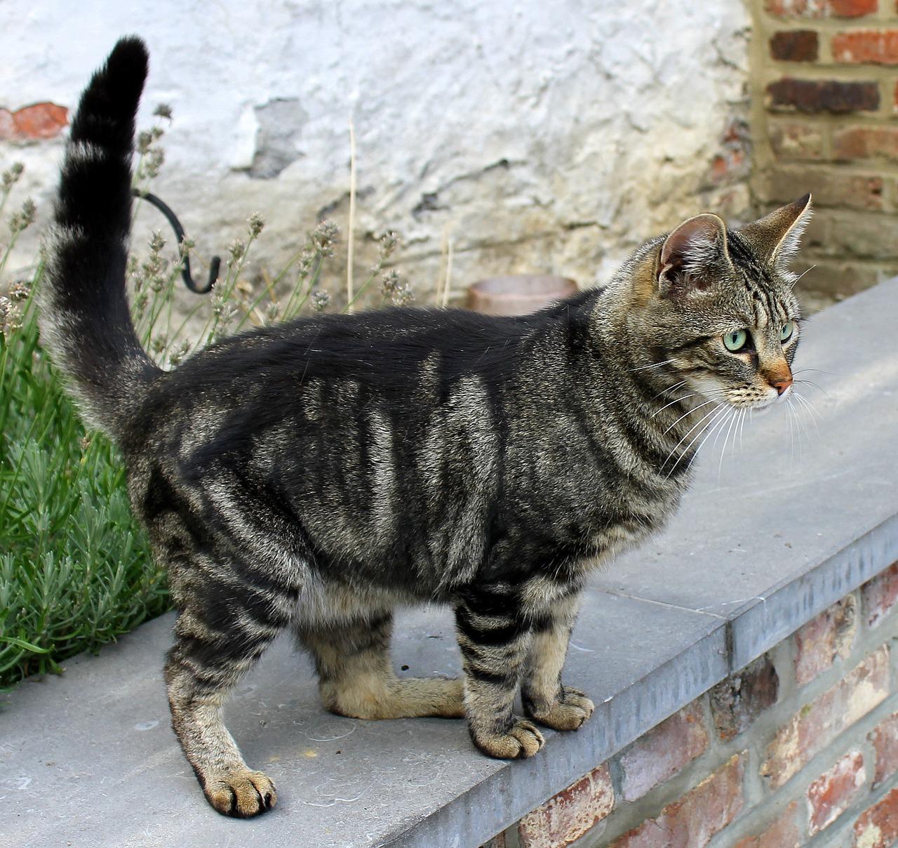 cat-699728_1280