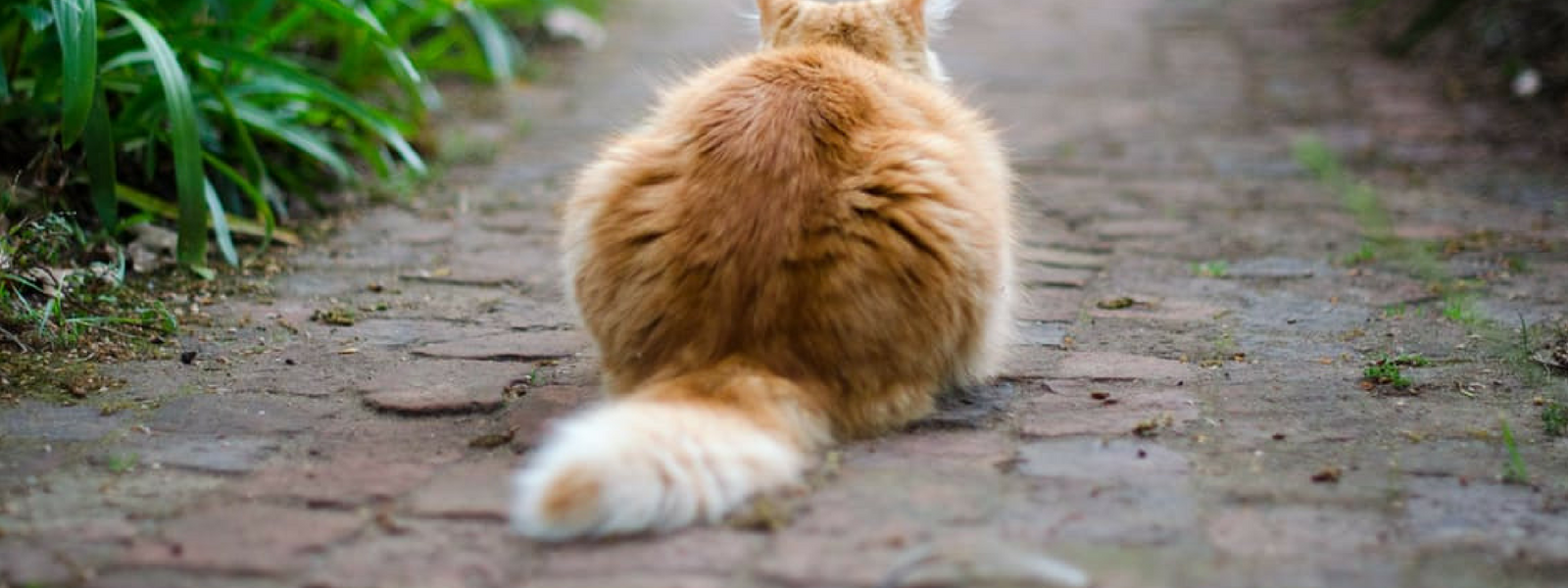 7 Facts About Your Cat's Tail