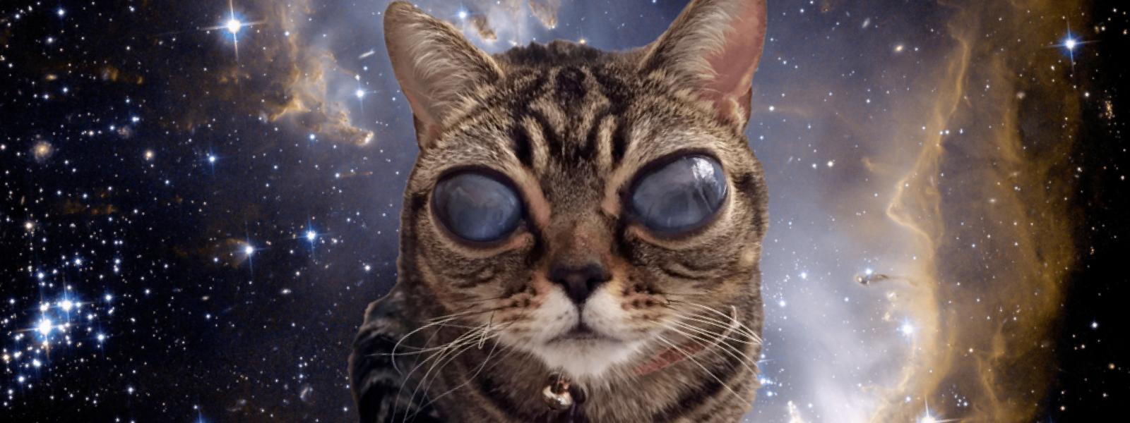 Celebrity Cats – Alien Cat Matilda