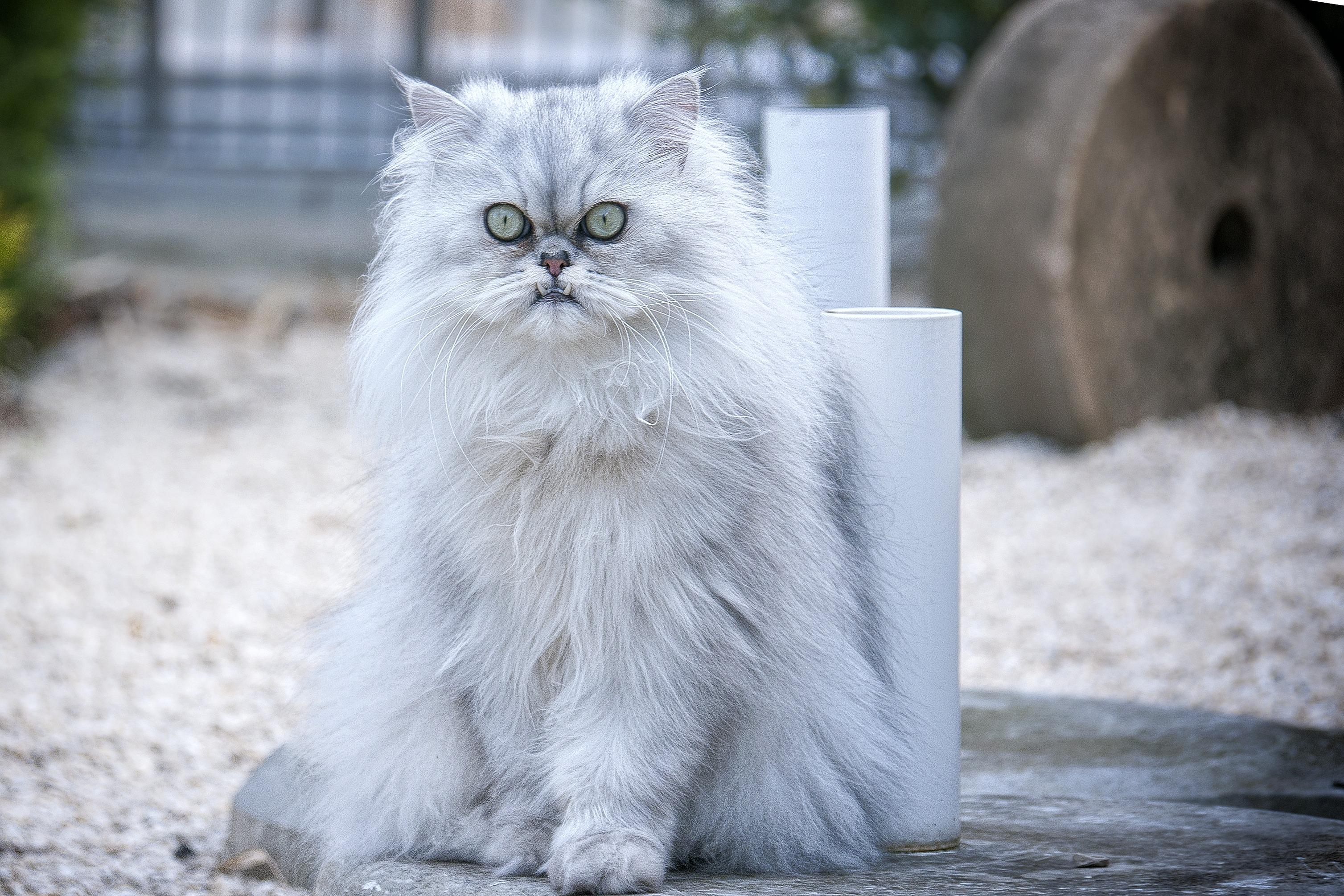 cat-301458