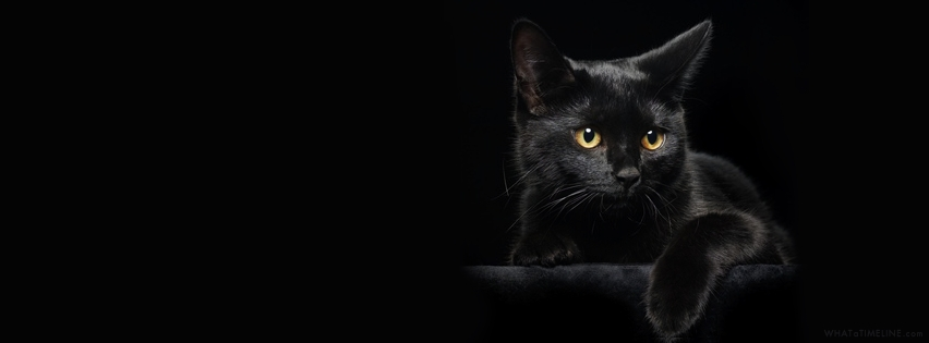 black-cat-fb-cover