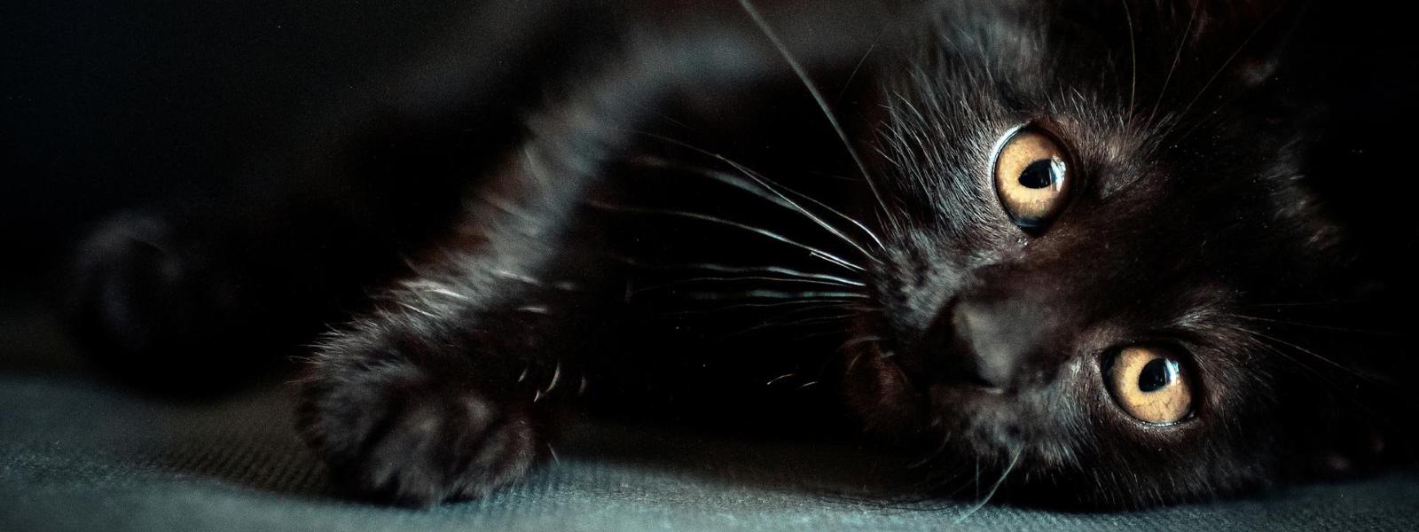 Scaretober: Kitten Edition