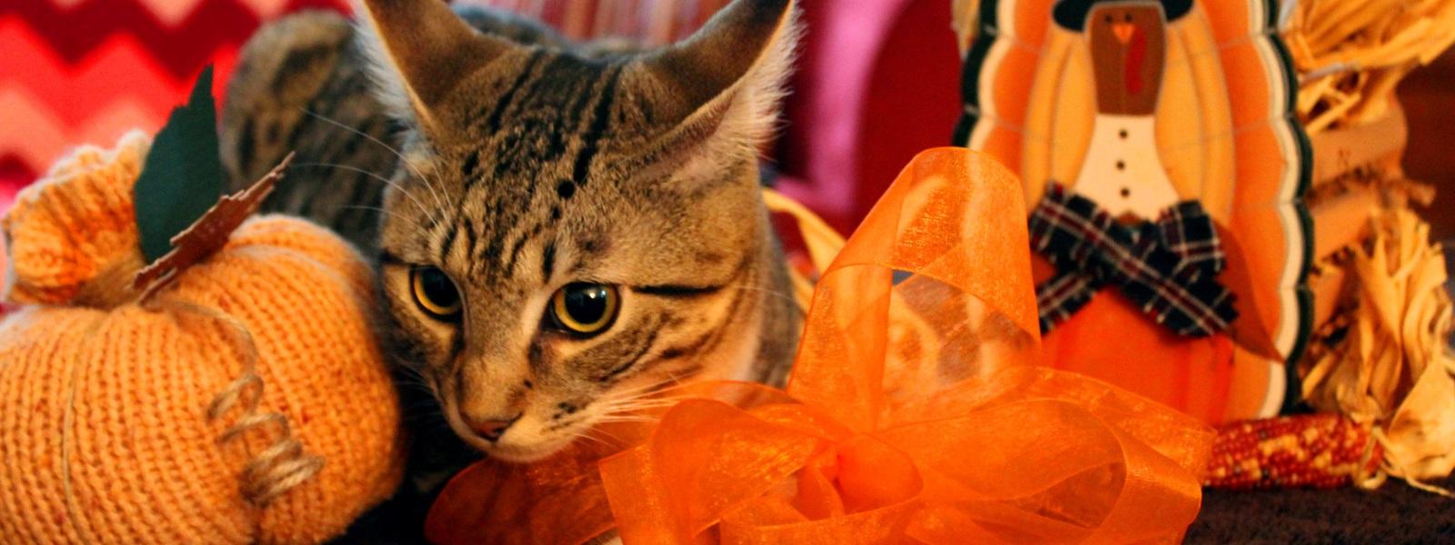 A Fussie Cat Feast!