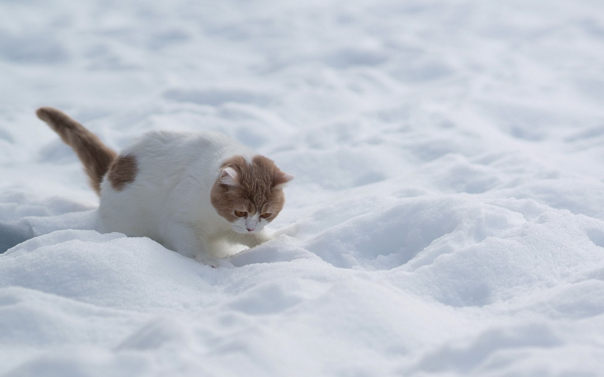 Kitten Red Snow White Winter Baby Cat Pictures Hd Animals