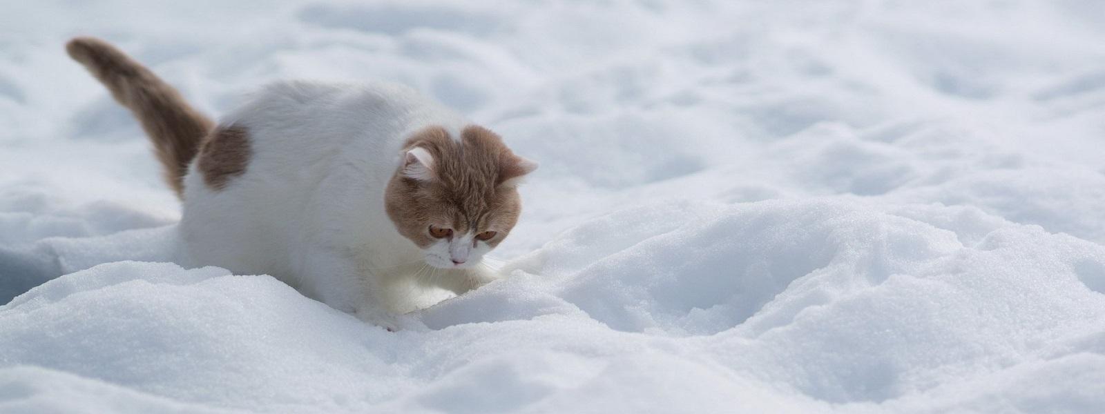 Fussie Cat Winter Tips